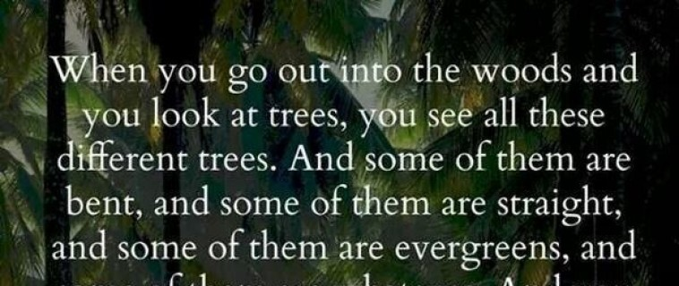 When you go into the woods…